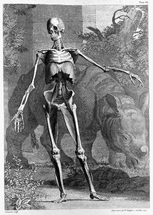 view Engravings of anatomical designs: musclemen.