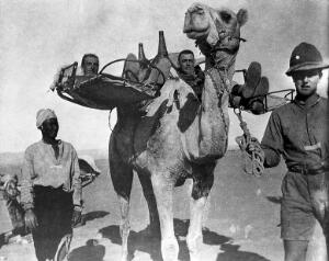 view Camel transport of the wounded.