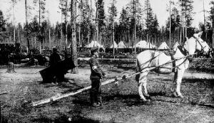 view WWI: transport of wounded using sled pulled by mule