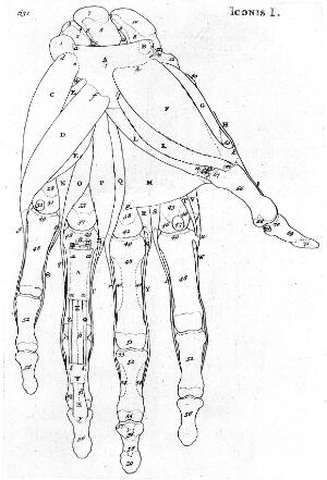 view Bones of the hand.