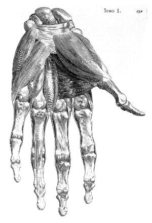 view Muscles of the hand.
