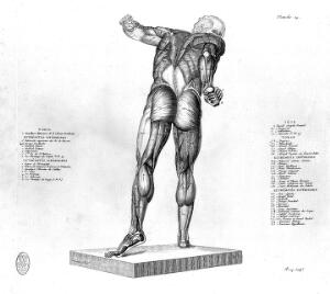 view Skeleton and muscles.