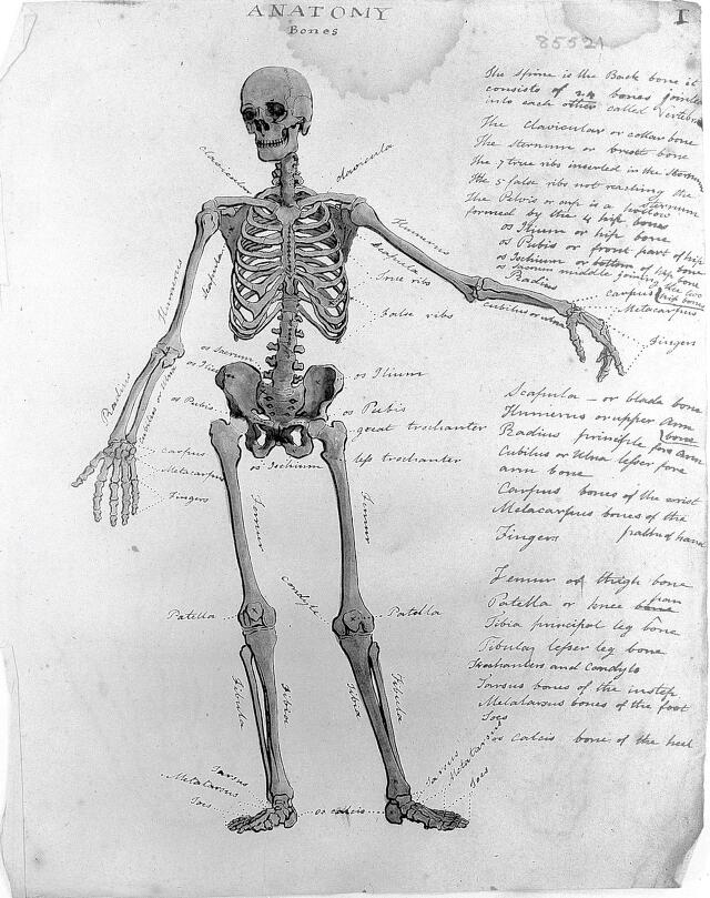 Human Anatomy Catalogue Search Wellcome Collection