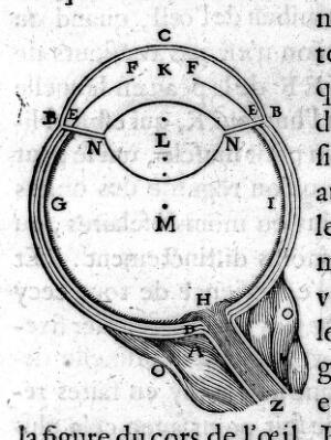 view Descartes: Optics- dicourse on methods...The Eye