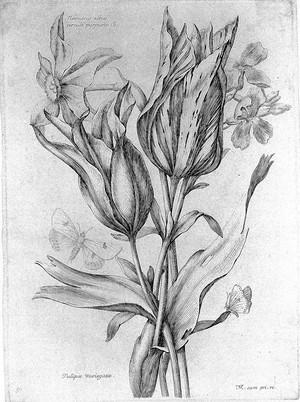 """view Robert """"Variae ac..."""", 1660; engravings"""
