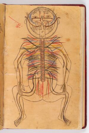 view Nervous system, Avicenna, Canon of Medicine