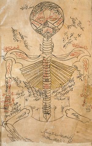 view Skeleton system., Avicenna, Canon of Medicine
