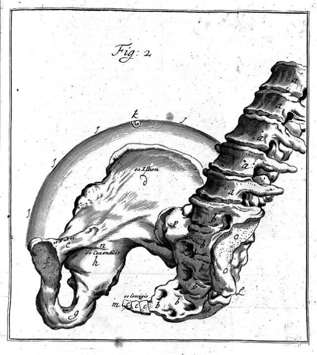 gynaecology 17th century catalogue search well e collection 17th Century Beards pelvis from h deventer operationes chirurgicae 18th century