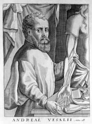 view Portrait of Andreas Vesalius (1514 - 1564), Flemish anatomist