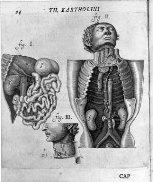 view Thomas Bartholin, dissections