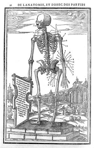 view Woodcut: skeleton, circa 1530-1545.