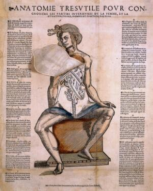view Anatomical fugitive sheet; female.