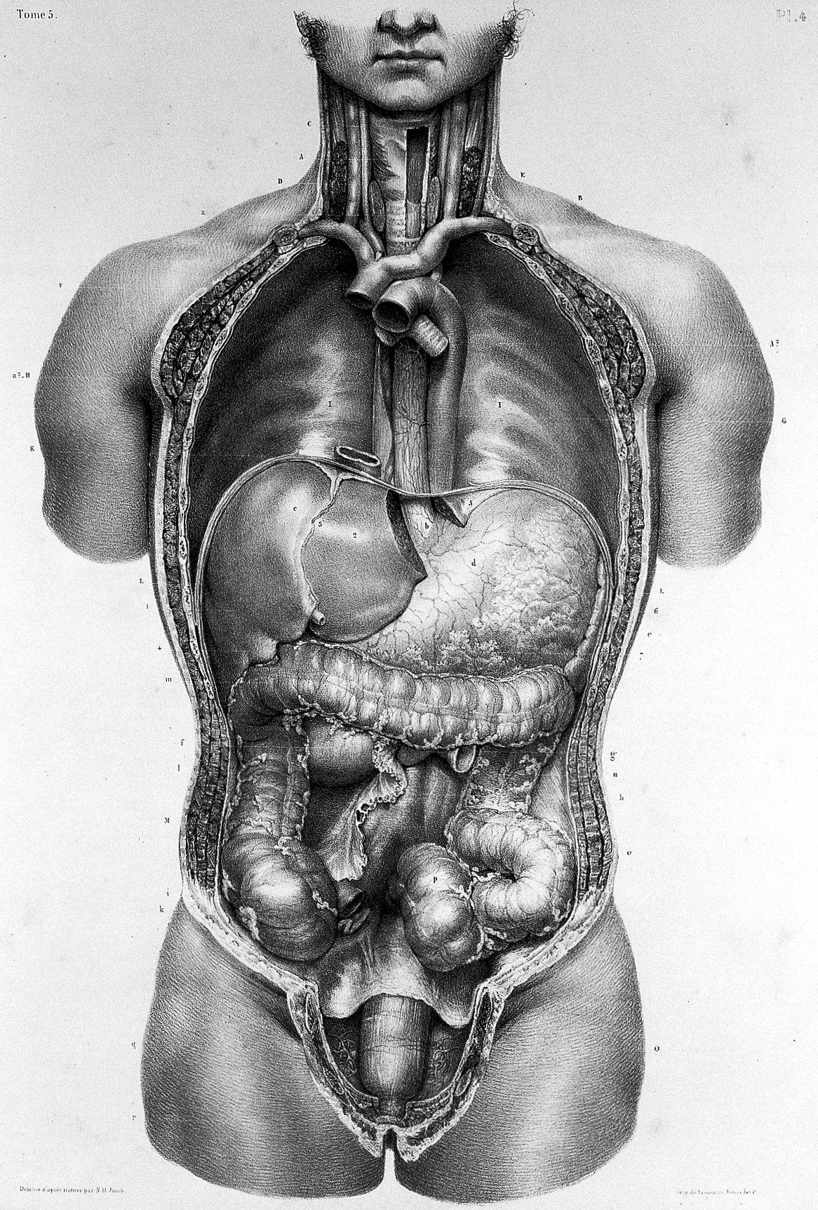 """Anatomie De L Homme bourgery & jacob, """"traite complet de l'anatomie de l'homme"""