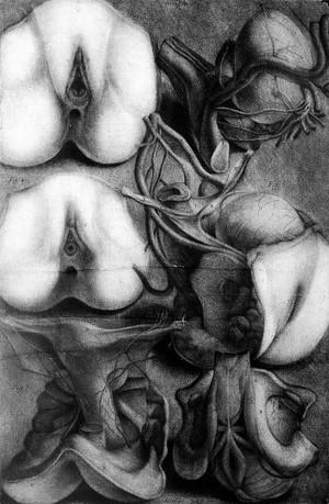 view Generative organs, Gautier d'Agoty