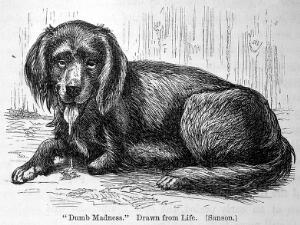 view Rabies and hydrophobia... George Fleming 1872