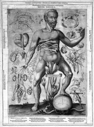 view J. Remmelin, 1660: male anatomy