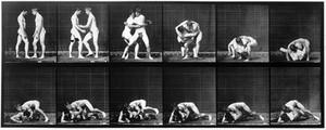 "view E. Muybridge ""Animal locomotion"", plate"