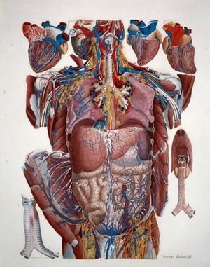 view Anatomical Illustration
