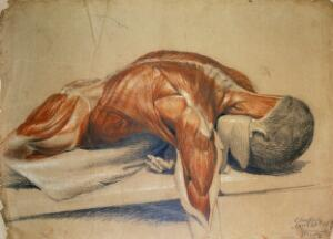 view An écorché figure (life-size), lying prone on a table: the right arm hangs down below the table. Red chalk and pencil drawing, with bodycolour, by C. Landseer, 1813 (?).