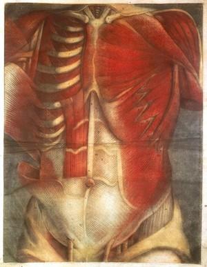view J.F. Gautier D'Agoty, Anatomie generale des