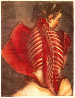 view Gautier d'Agoty, mezzotint ecorche female torso, back, 1746