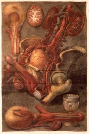 view J.F. Gautier d'Agoty, Myologie complette en coleur...