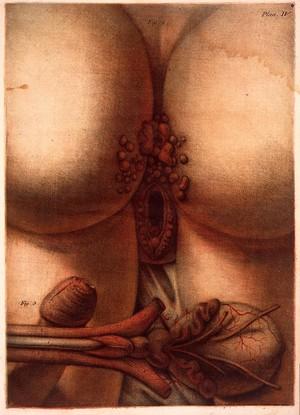 view J. F. Gautier d'Agoty, Exposition Anatomique...