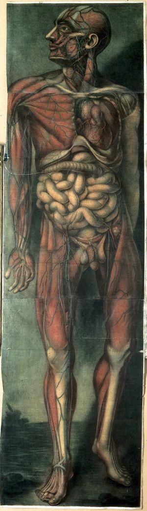 view J.F. Gautier d'Agoty, Myologie complette en couleur...