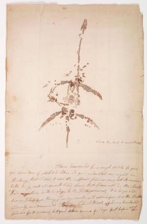 view Autograph letter concerning the discovery of plesiosaurus, from Mary Anning; sketch of plesiosaurus.