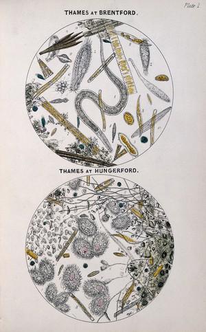view Arthur Hill Hassall, A microscopic examination...