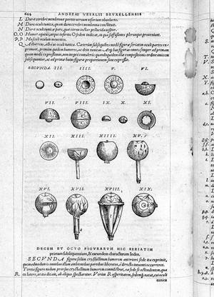 view Vesalius, De Humani corporis fabrica