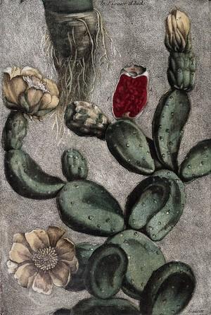 view Gautier D'Agoty: Collection des plantes usuelles...