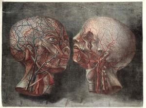 view Gautier D'Agoty; Anatomie de la tete...