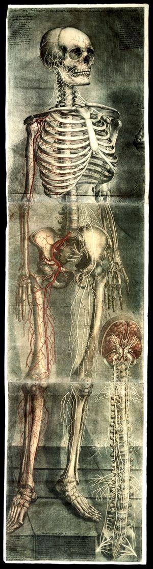 view Gautier D'Agoty, Anatomie Generale des visceres...