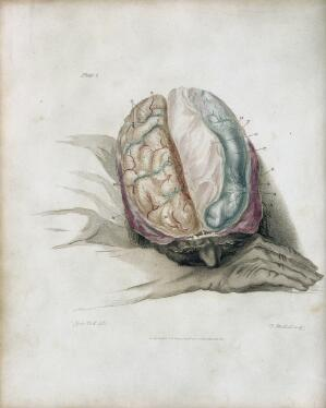 view Plate 1. Sir Charles Bell, The anatomy of the brain, 1802.