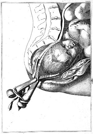 view Hamilton, Anatomical tables with explanations...