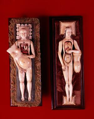 view Female anatomical figures in ivory