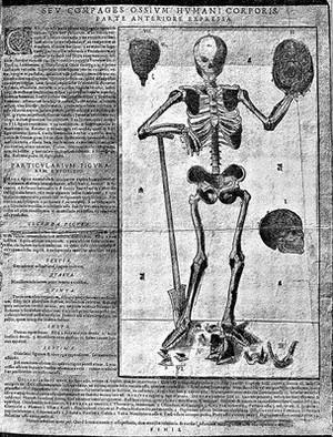 view The human skeleton; 1493