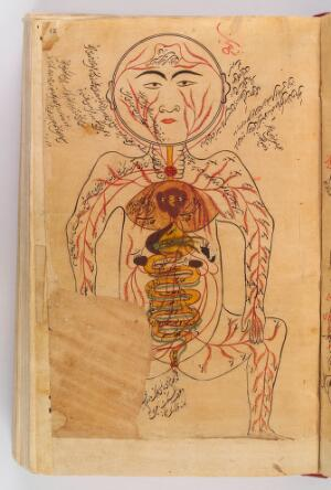 view Drawing of viscera etc., Avicenna, Canon of Medicine