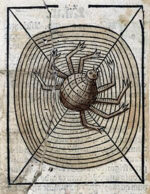 view A spider on its web, woodcut, 1547