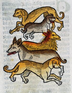 view Five different types of dogs, woodcut, 1547