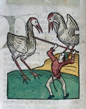 view A man and two birds (storks?), woodcut, 1547