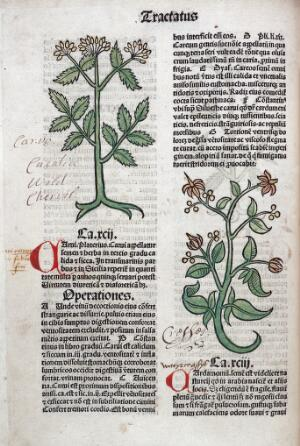 view Chervil and cardamom plants, 1491