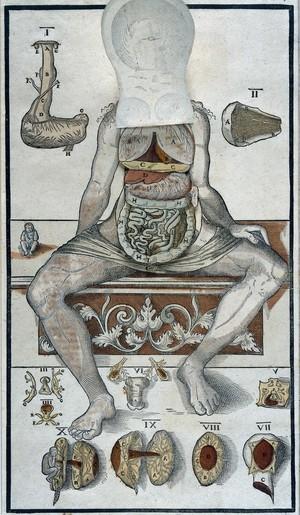 view Anatomical fugitive sheet, female