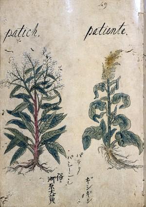 view Japanese Herbal, 17th century
