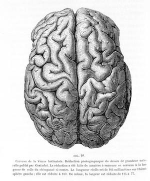 view Paul Broca, Memoires d'Anthropologie, 1877