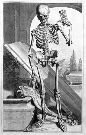 view G. Bidloo, Anatomia humani corporis...