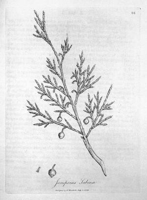 view W.M. Woodville, Medical Botany, vol. 2