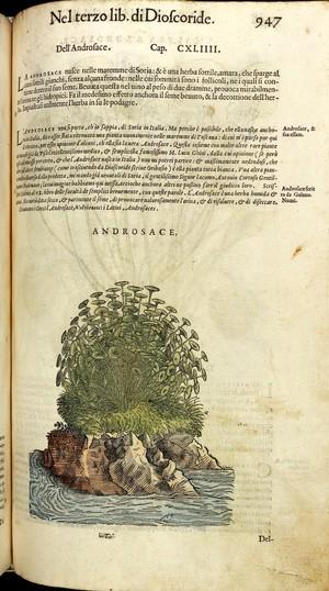 view P. Mattioli, I discorsi ...nelli sei libri