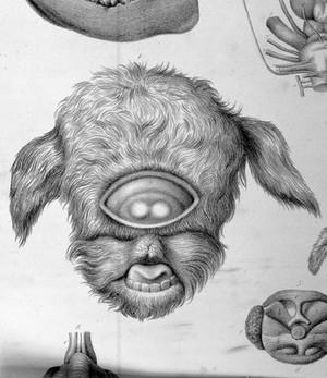 view ABNORMALITIES: Tabulae ad illustrandam embry